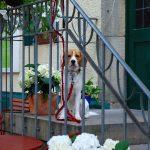 162-Hund-vor-Kneipe-00146